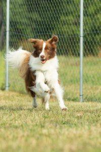 custom dog run fencing dog run fence dog pen builder collinsville illinois