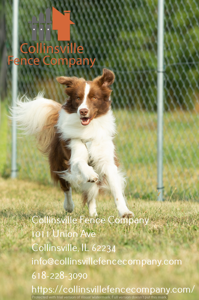 dog run fencing collinsville il